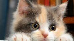 Rüyada Kedi Görmek Ne Anlama Gelir, Neye İşarettir?