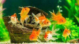 Rüyada Havuzda Balık Görmek Ne Anlama Gelir, Neye İşarettir?