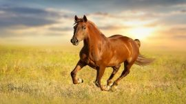 Rüyada Kahverengi Ata Binmek Ne Anlama Gelir, Neye İşarettir?