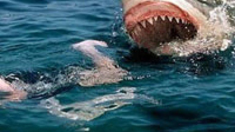 Rüyada Balık Saldırısı