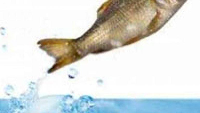 Rüyada Balık Zıplaması Görmek