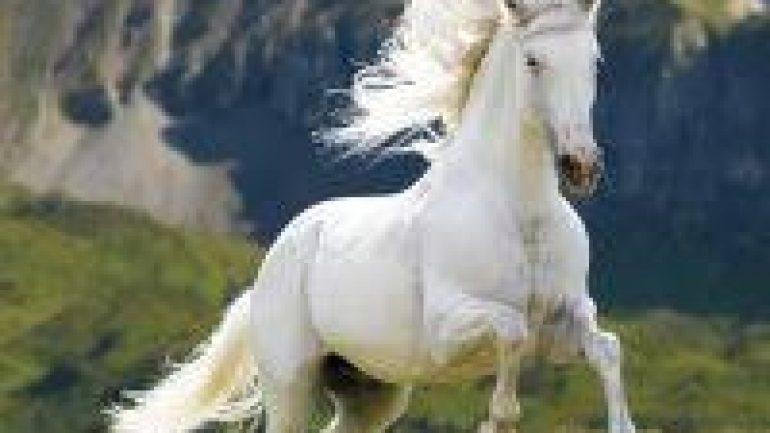 Rüyada Beyaz At Görmek Ne Anlama Gelir, Neye İşarettir?