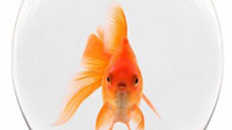 Rüyada Fanusta Balık Görmek