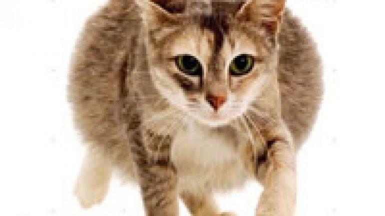 Rüyada Hamile Kedi Görmek
