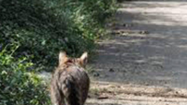 Rüyada Kedi Avlamak