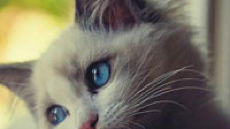 Rüyada Kedinin Peşinden Gelmesi