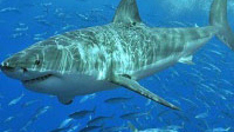 Rüyada Köpek Balığı Görmek