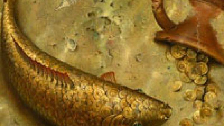 Rüyada Pullu Balık Görmek