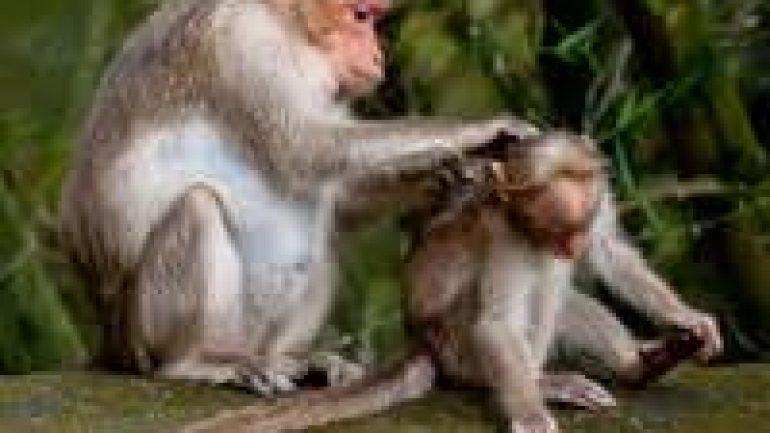 Rüyada Maymun Görmek Ne Anlama Gelir, Neye İşarettir?