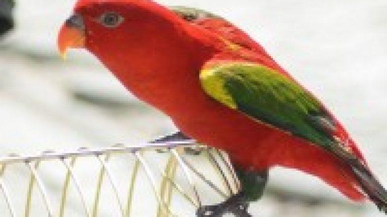 Rüyada Papağan Görmek Ne Anlama Gelir, Neye İşarettir?