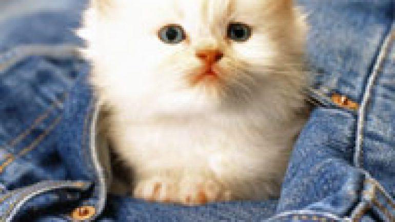 Rüyada Küçük Kedi Görmek Ne Anlama Gelir, Neye İşarettir?