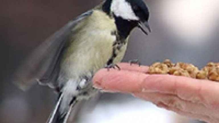 Rüyada Kuş Beslemek Ne Anlama Gelir, Neye İşarettir?