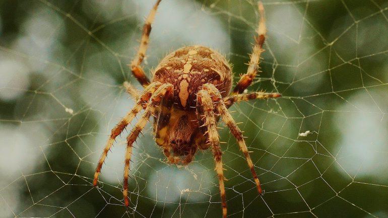 Rüyada Örümcek Görmek Ne Anlama Gelir, Neye İşarettir?