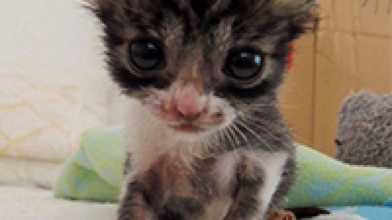 Rüyada Ağlayan Yavru Kedi Görmek Ne Anlama Gelir, Neye İşarettir?