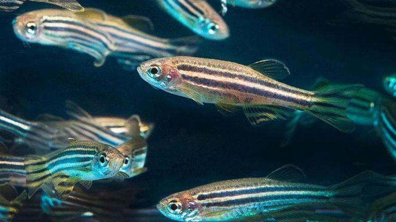 Rüyada Balık Görmek Ne Anlama Gelir, Neye İşarettir?
