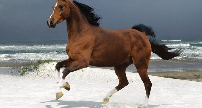 Rüyada At Görmek Ne Anlama Gelir, Neye İşarettir?
