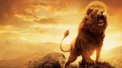 Rüyada Aslan Görmek Ne Anlama Gelir, Neye İşarettir?