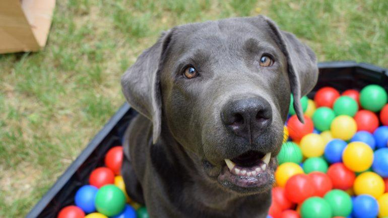 Rüyada Köpek Görmek Ne Anlama Gelir, Neye İşarettir?