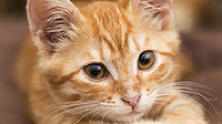 Rüyada Turuncu Kedi Görmek Ne Anlama Gelir, Neye İşarettir?