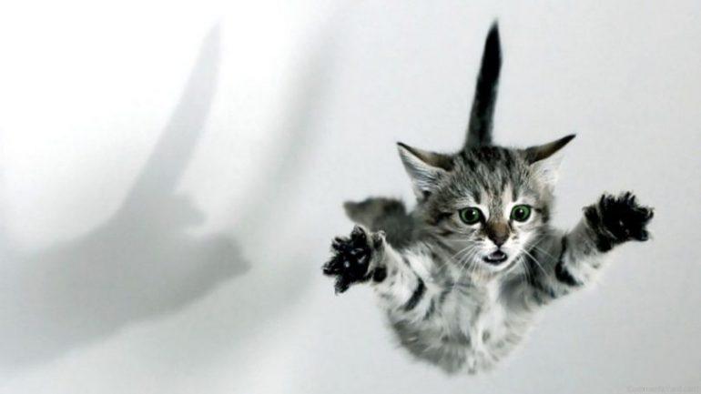 Rüyada Kedi Atmak Ne Anlama Gelir, Neye İşarettir?