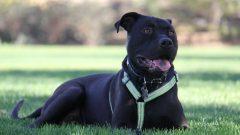 Rüyada Siyah Köpek Görmek Ne Anlama Gelir, Neye İşarettir?