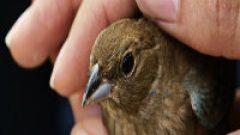 Rüyada Yaralı Kuş Görmek Ne Anlama Gelir, Neye İşarettir?