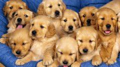 Rüyada Köpek Yavruları Görmek Ne Anlama Gelir, Neye İşarettir?