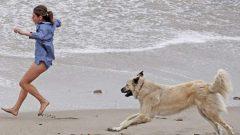 Rüyada Köpekten Kaçtığını Görmek Ne Anlama Gelir, Neye İşarettir?