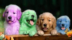 Rüyada Renkli Köpek Görmek Ne Anlama Gelir, Neye İşarettir?
