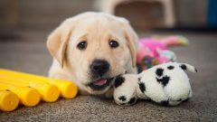 Rüyada Yavru Köpek Görmek Ne Anlama Gelir, Neye İşarettir?