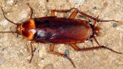 Rüyada Hamam Böceği Görmek Ne Anlama Gelir, Neye İşarettir?