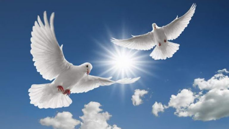 Rüyada Beyaz Güvercin Görmek Ne Anlama Gelir, Neye İşarettir?