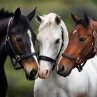 Rüyada At Bağlamak