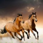 Rüyada At Çalmak