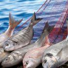 Rüyada Balık Almak