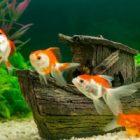 Rüyada Balık Beslemek