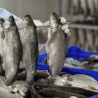 Rüyada Balık Fabrikası Görmek