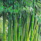 Rüyada Bambu Görmek
