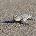 Kaplumbağanın Koşması