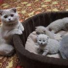 Rüyada Kedi Ailesi Görmek