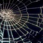 Rüyada Örümcek Ağı Görmek Ne Anlama Gelir, Neye İşarettir?