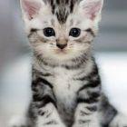 Rüyada Yavru Kedi Bakmak