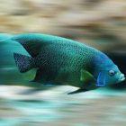 Rüyada Yeşil Balık Görmek